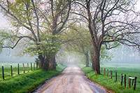 country road cades cove landscape photography