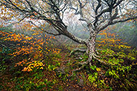 Craggy Gardens Landscape Photography