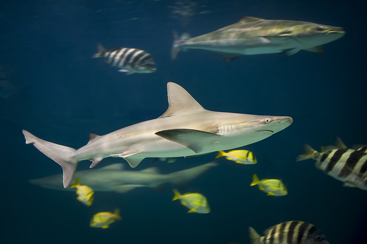 Shark Marine Life Photography