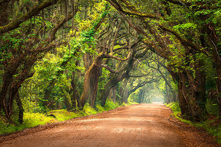 Charleston SC Lowcountry Landscape Photography