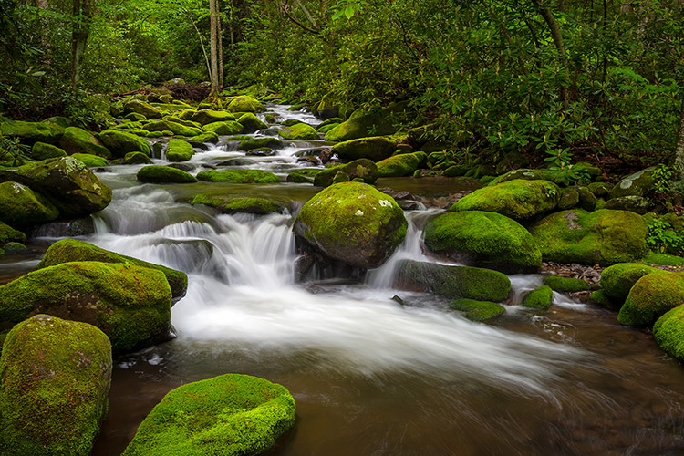 Smoky Mountains Moss Covered Creek Gatlinburg
