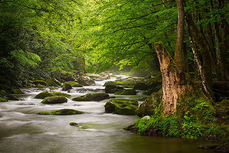 Tremont Great Smoky Mountains Scenic Landscape