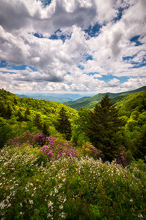 Appalachian Mountains Spring Flowers Landscape